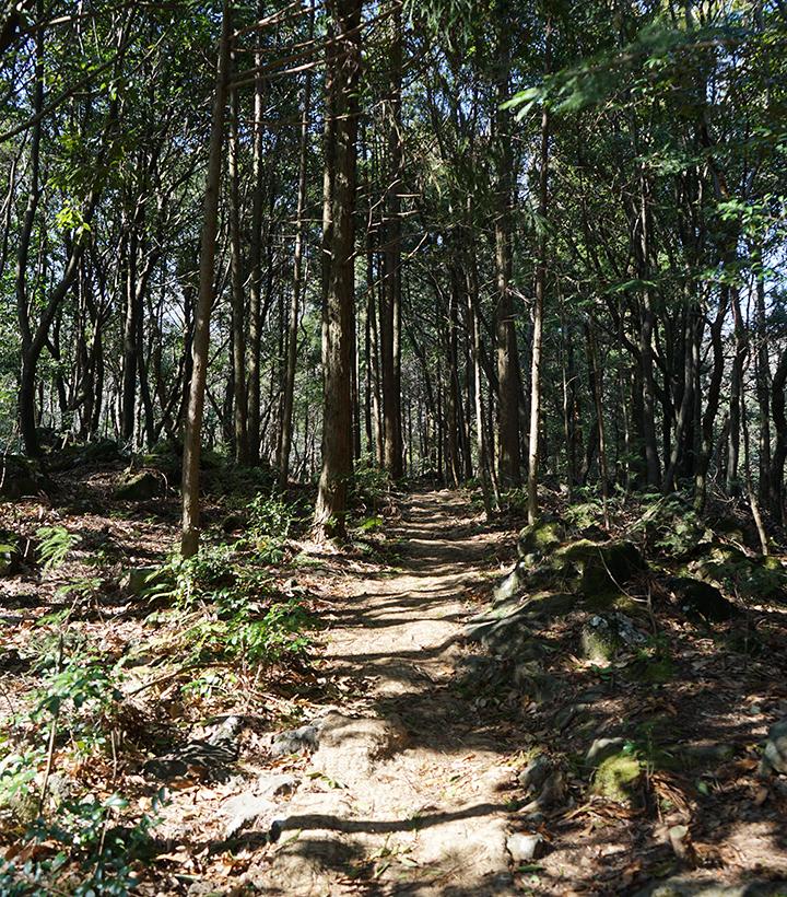 울창한 나무와 흙길이 조화된 서귀포 치유의 숲